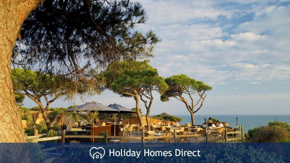 Pine trees in the pine cliffs resort in Portugal