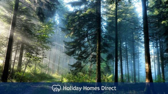 visit the cool Mountain Forests