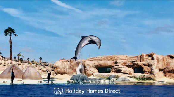 Dolphin show at Rancho Texas. 15 mins away
