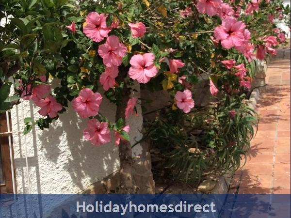 Spanish Tourism Approved Apt. That Feels Like A Villa!  Pool. Aircon ,free Wifi, Uk Tv Rte,  5 Mins Walk To Blue Flag Beaches, Restaurants, Shops Etc: Image 39