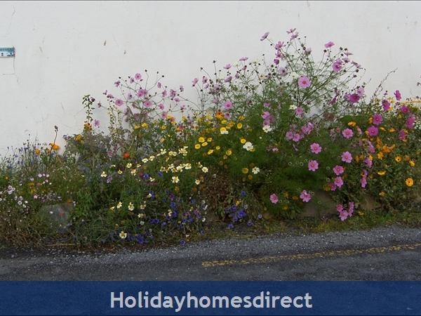 Bromore Cottage: Wildflower Garden