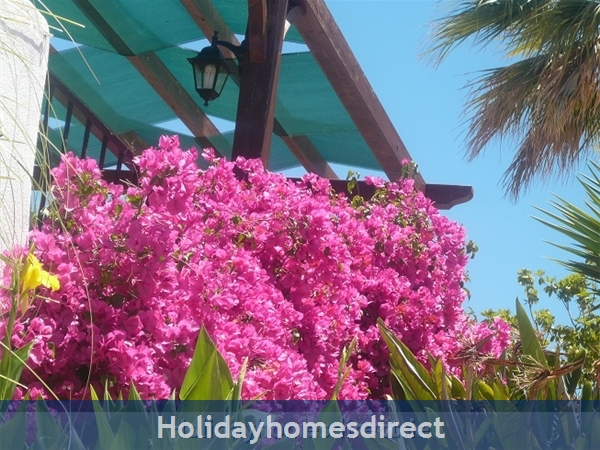 ***** Alto 42 D At Country Club Alvor: flowers in bloom at Poolside Cottons