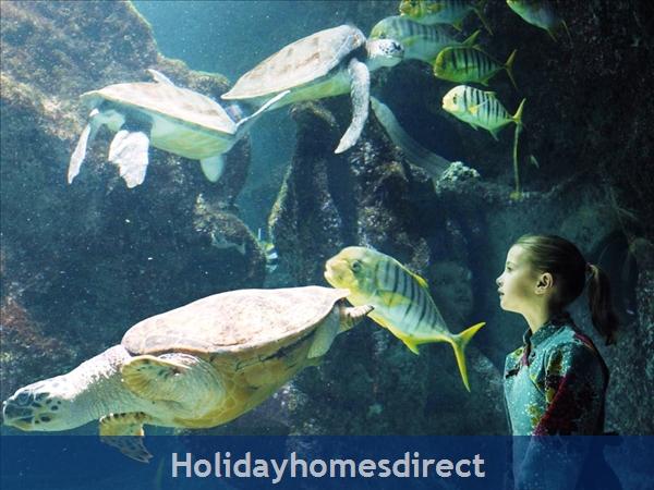 Maison: La Rochelle Aquarium