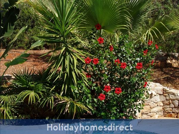 Casa Jasmina: 8. Palm-fringed pool