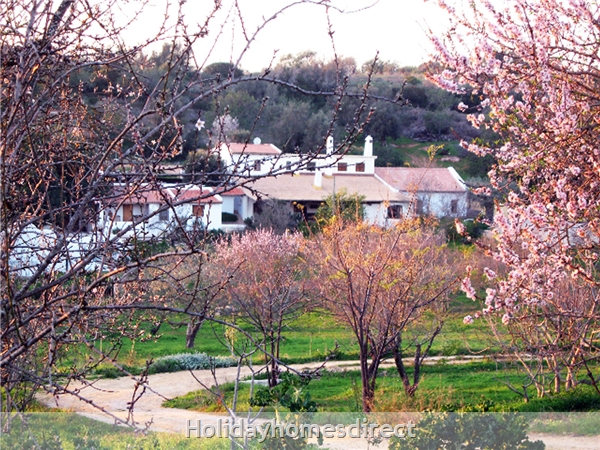 On the driveway to Oxalá in Springtime
