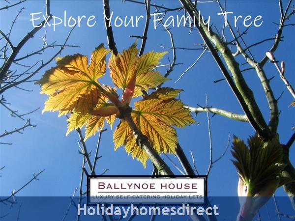 The Barn House (ballynoe House): Resident Genealogist