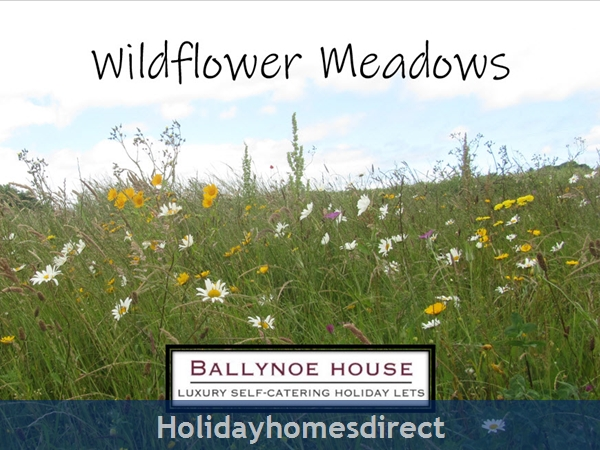 The Barn House (at Ballynoe House): Wildflower Meadows