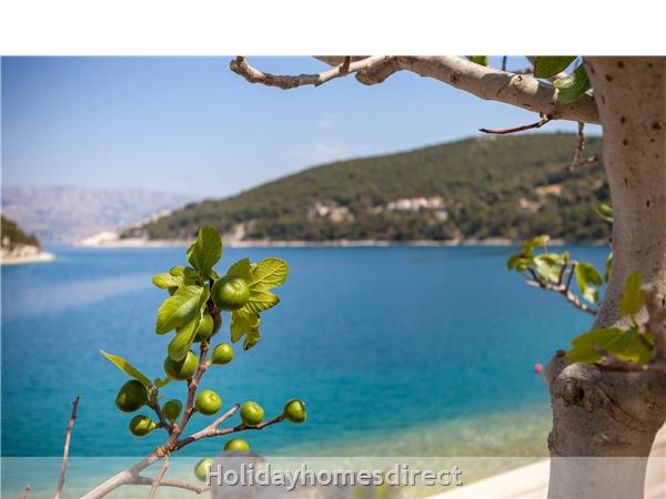 Holiday Home Tea - Island Of Brac: Image 5